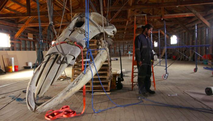 Biólogo marino y artista visual crean primer museo de historia natural en la Patagonia