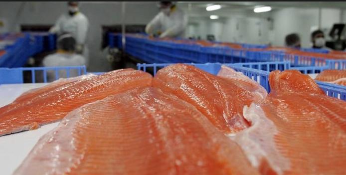 Quiénes son los peces gordos de la cuestionada industria salmonera: flujo de capitales renueva la propiedad del sector