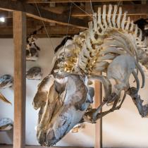 Museo Río Seco en Magallanes: un santuario único que vincula la historia natural de la Antártica con el arte