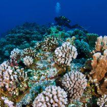 Científicos descubren que los corales necesitan una década para recuperarse del blanqueo
