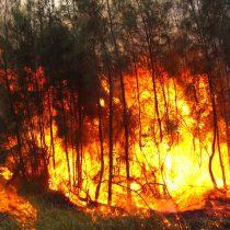 Incendios forestales ya han arrasado al menos 53.000 hectáreas