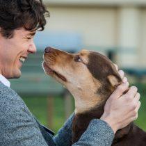 Mis Huellas a Casa: la película que atrapará a los amantes de las mascotas