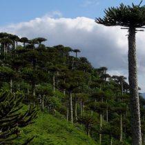 Invitan a emprendedores turísticos de la Araucanía a postular a incubadora de negocios