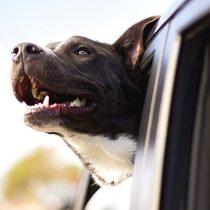 Vacaciones con mascotas: ¿Cómo lograr que no sea una situación estresante para ellos?