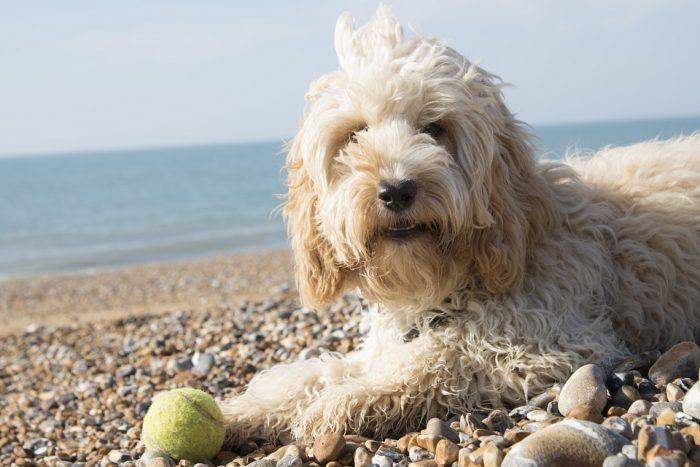 Abren la primera playa para mascotas en Chile