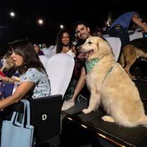 Un cine de Brasil abre sus puertas a 180 perros para un preestreno