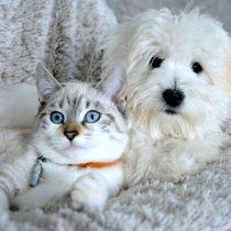 Evite multas: vence el plazo para inscribir a las mascotas