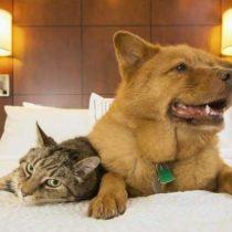 Hoteles pet friendly: viajando con las mascotas