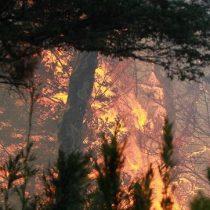 Un total de 32 incendios forestales activos afectan a la zona sur