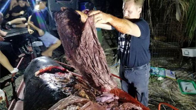 La impresionante imagen de una ballena muerta llena de plástico en su estómago