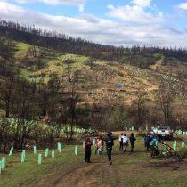 Llaman a plantar árboles nativos como una acción para combatir el cambio climático