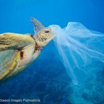 Estudio revela impactante alcance de la contaminación del plástico en las mayores profundidades del mar