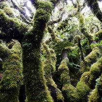 Charlas Entre Mate&Ciencia: Efectos del cambio climático en los bosques en Biblioteca Regional de Coyhaique