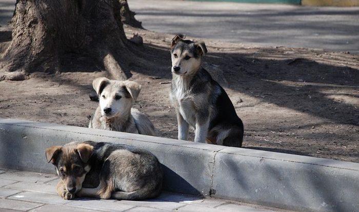 Encuesta revela que vecinos consideran a los perros callejeros como el principal problema de sus barrios