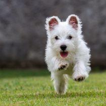 Cuidado: automedicar con fármacos para humanos a tu mascota puede llevar a serios daños hepáticos