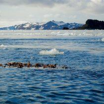Algas flotantes podrían desplazar nuevos organismos a la Antártica