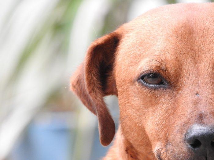 Cuáles son los cinco Dominios del Bienestar Animal para ponerlos en práctica con tu mascota