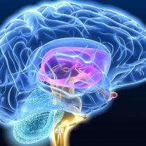 El estudio con futbolistas que buscapoder diagnosticar el Alzheimer
