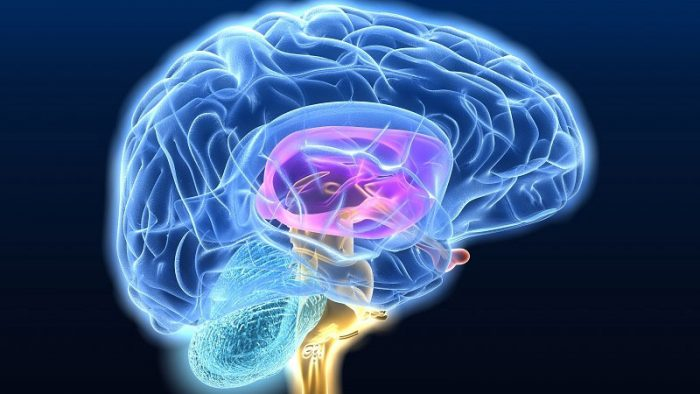 DeMente «reloaded»: segundo libro de neurociencia del CINV se adentra en lo más profundo del cerebro