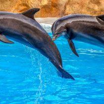 Parque acuático no usará más delfines en sus espectáculos tras cuatro muertes