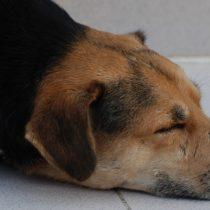 Conmoción por diversos casos de envenenamiento de mascotas en el país