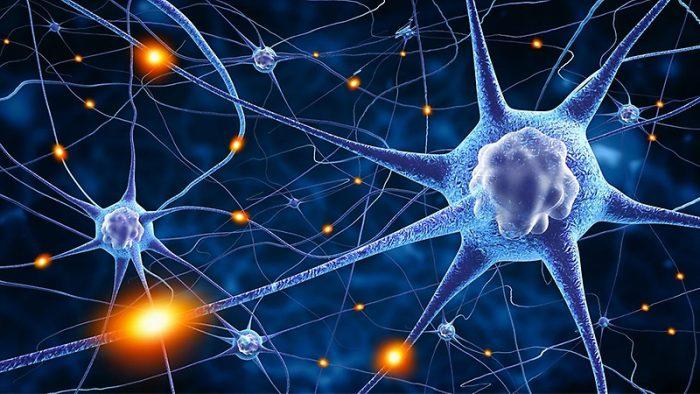 Científica avanza investigación en células centinelas, las encargadas de coordinar la respuesta inmune