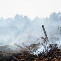 Financiamiento de plantaciones de pino en áreas incendiadas el 2017