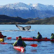 La apuesta turística que ofrece navegar con ballenas en el Estrecho de Magallanes