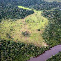 En 2018 se destruyeron 12 millones de hectáreas de selvas tropicales