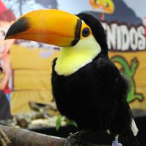 Expo Mascotas & Animales prepara su novena versión