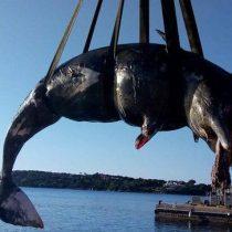 Otra ballena fue hallada muerta por el plástico en su interior