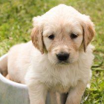 Los buenos hábitos alimenticios del perro se crean desde cachorros