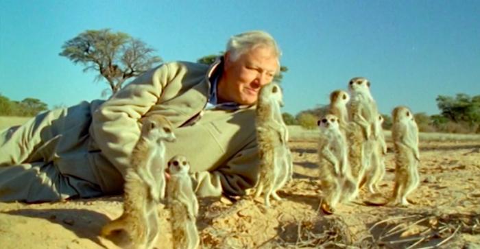 """Naturalista David Attenborough: """"Todo ha cambiado mucho, la vida salvaje está desapareciendo"""""""