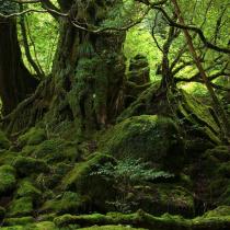 Los bosques de Chile y la COP 25