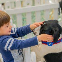 Feria Pets llega a Quilicura con divertidas actividades y lo último en productos para mascotas