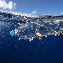 Científicos presentan innovador estudio para proteger 1/3 de los océanos el 2030