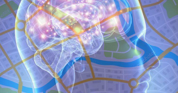 Neurociencias: depresión podría afectar oscilación cerebral que actúa como GPS interno