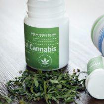 Estudio revela que el 76% de chilenos cree que marihuana para uso médico debería ser legal