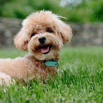 La modificación del Minvu que impide prohibir tenencia de mascotas en edificios