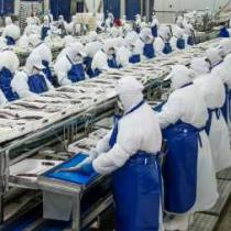 PacificBlu, la segunda empresa pesquera que anuncia el cierre de su planta en menos de una semana