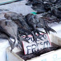 Pescadores y trazabilidad: una alternativa para ganar precios justos