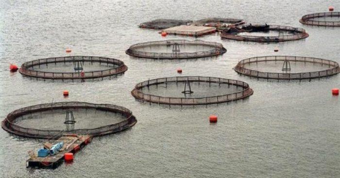 SalmonChile suspendió participación de productoras de alimento para peces involucradas en caso de colusión