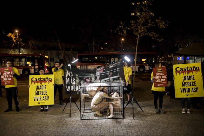 Animalistas protestan contra conocida panadería: piden no usar huevos de gallinas enjauladas