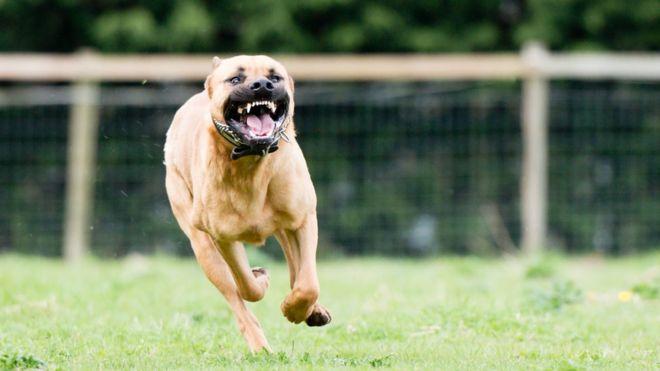 Cuáles son los perros más peligrosos para los niños