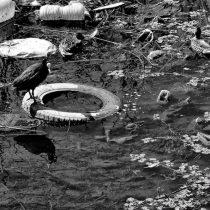 Municipalidad apunta a la reutilización de neumáticos en su plan de reciclaje