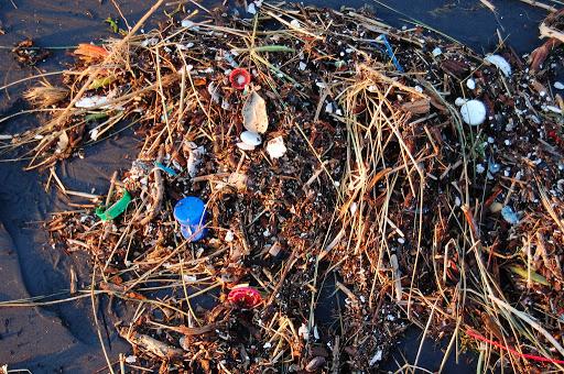 Contaminación plástica daña bacterias que producen oxígeno
