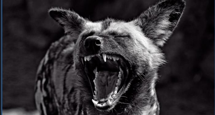 La jauría elitaria: las hienas de la modernización