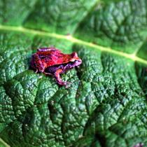 Aprobación del Servicio de Biodiversidad y Áreas Protegidas: una necesidad que valdrá la pena