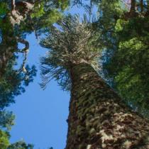 La débil legislación ambiental y su responsabilidad en la pérdida irreversible de biodiversidad en Chile