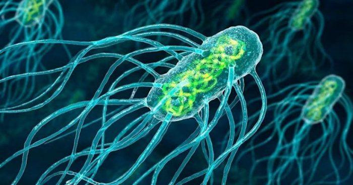 Investigadores desarrollan terapia contra el cáncercon bacterias de Salmonella